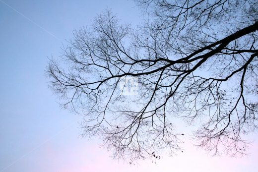 冬の木 亞流