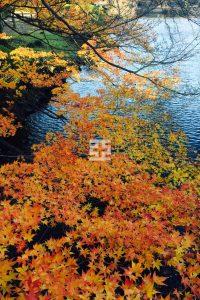 池近くにあったもみじの紅葉