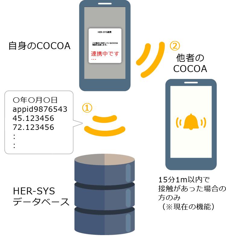 改定案:COCOAとHER-SYS(ハーシス)APIなどで連携した時の概念図